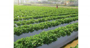 نایلون کشاورزی مشکی به قیمت کارخانه